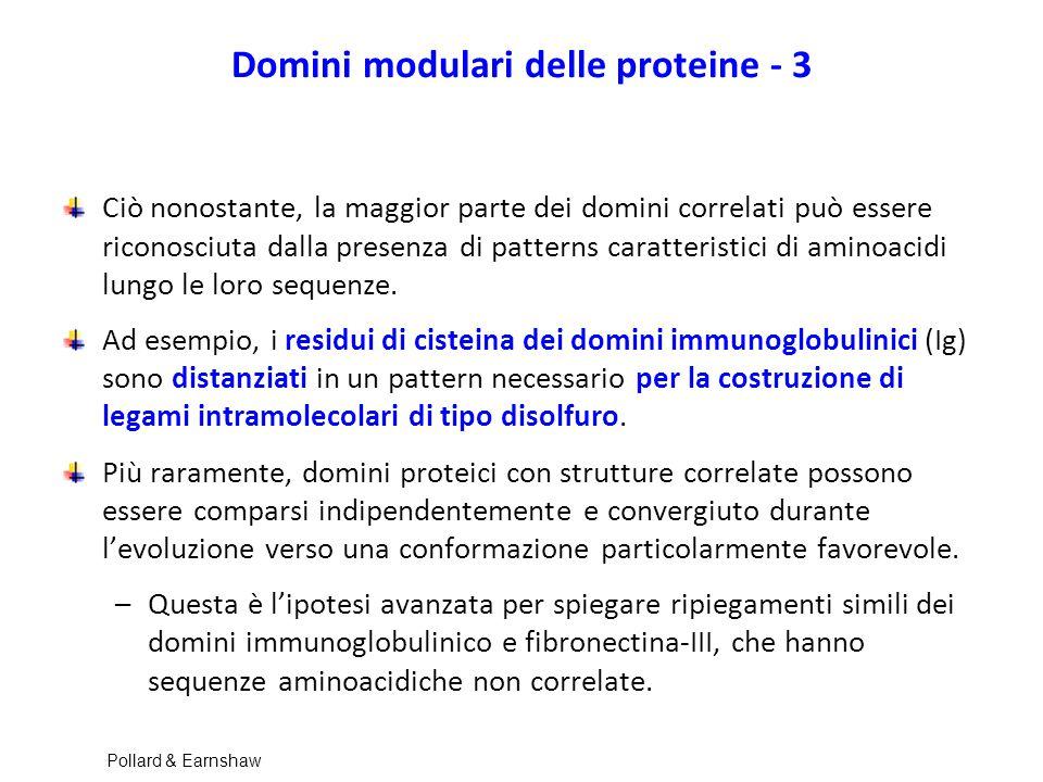Domini modulari delle proteine - 3