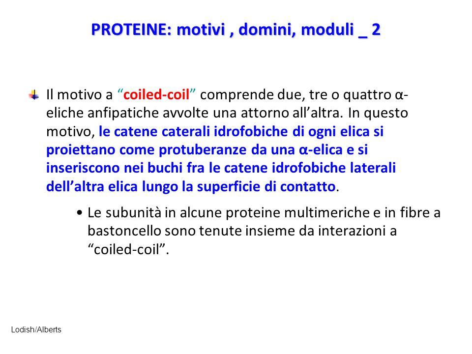 PROTEINE: motivi , domini, moduli _ 2