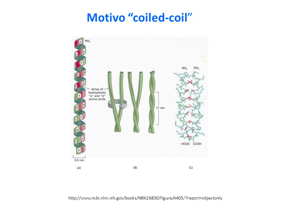 Motivo coiled-coil http://www.ncbi.nlm.nih.gov/books/NBK26830/figure/A405/ report=objectonly