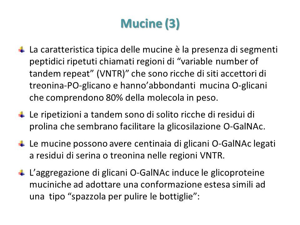 Mucine (3)