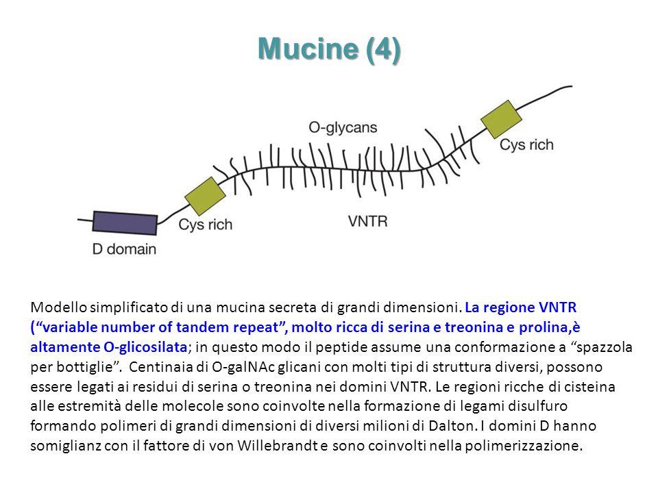 Mucine (4)