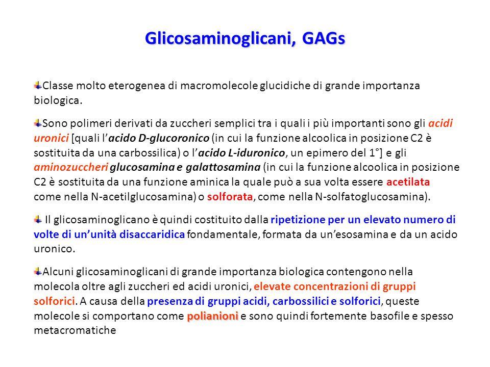 Glicosaminoglicani, GAGs