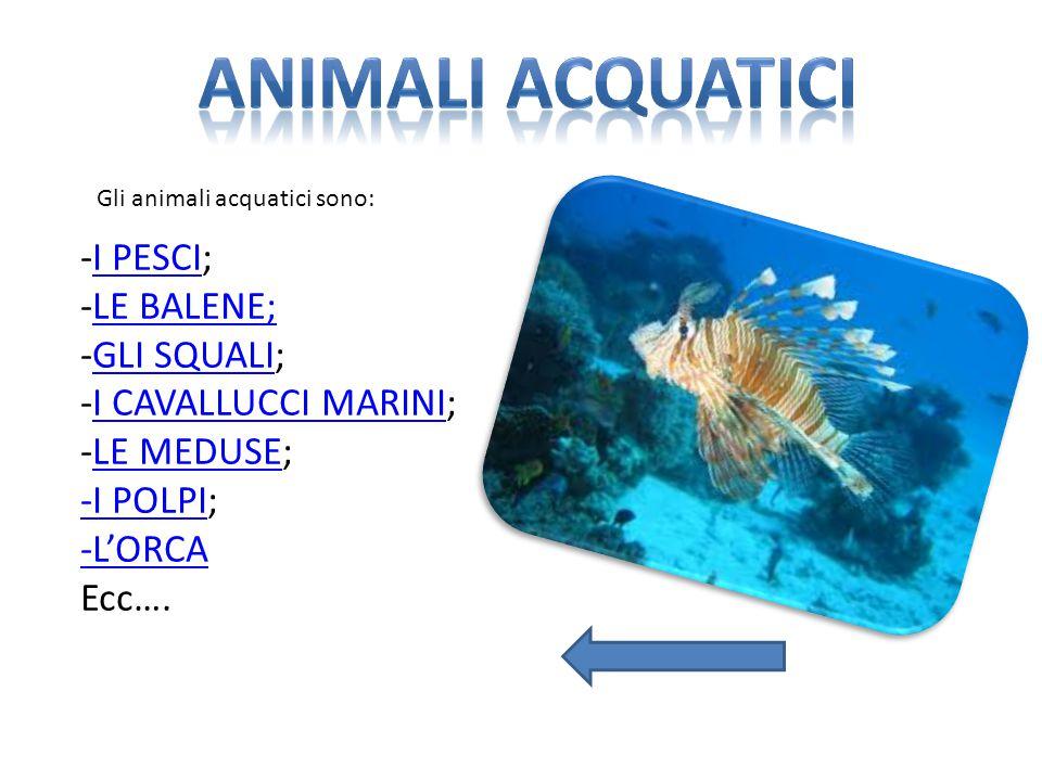 Animali acquatici -I PESCI; -LE BALENE; -GLI SQUALI;