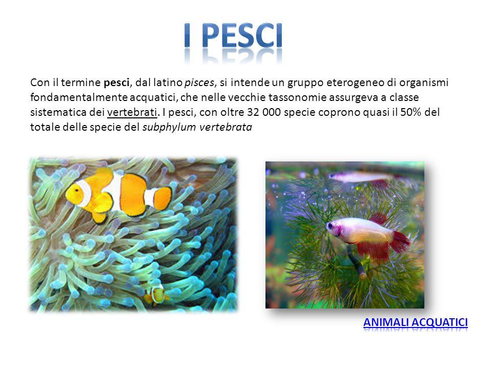 I pesci