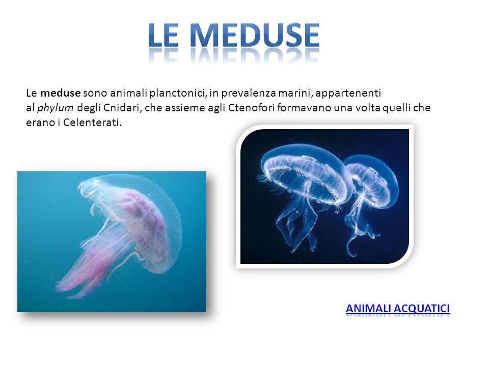 Le meduse