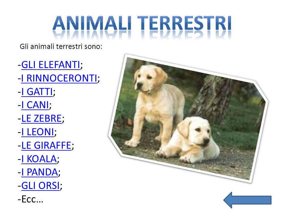 ANIMALI TERRESTRI GLI ELEFANTI; -I RINNOCERONTI; I GATTI; I CANI;