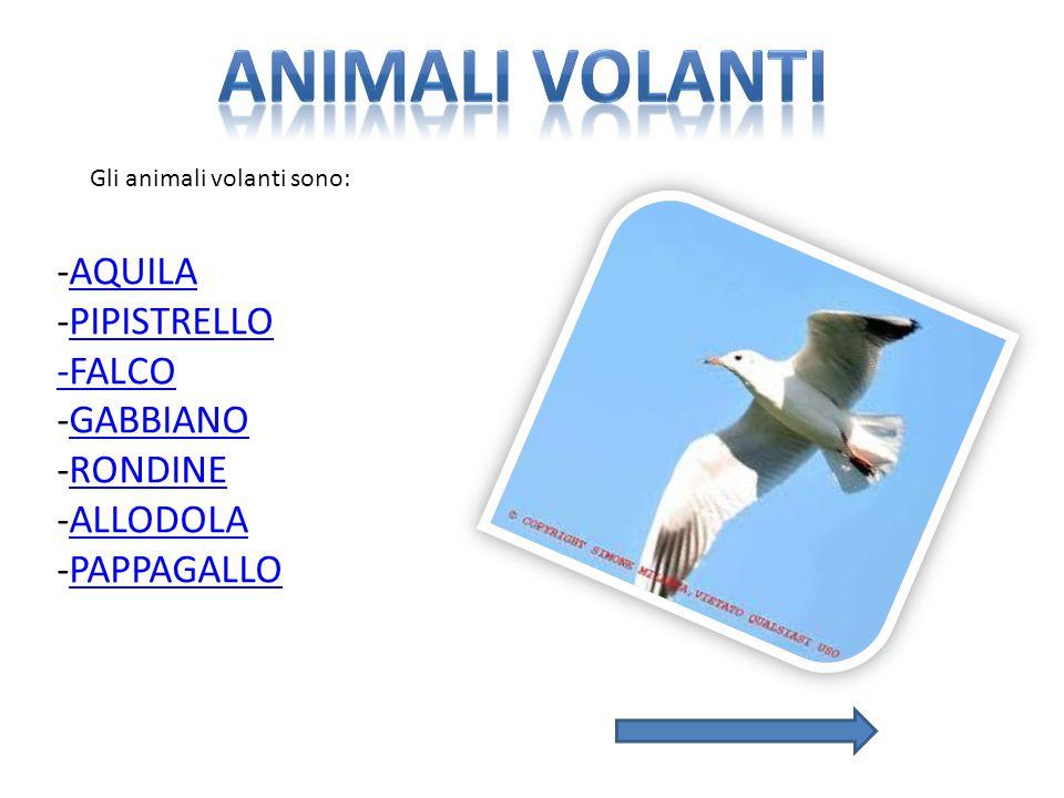 Animali volanti -AQUILA -PIPISTRELLO -FALCO -GABBIANO -RONDINE