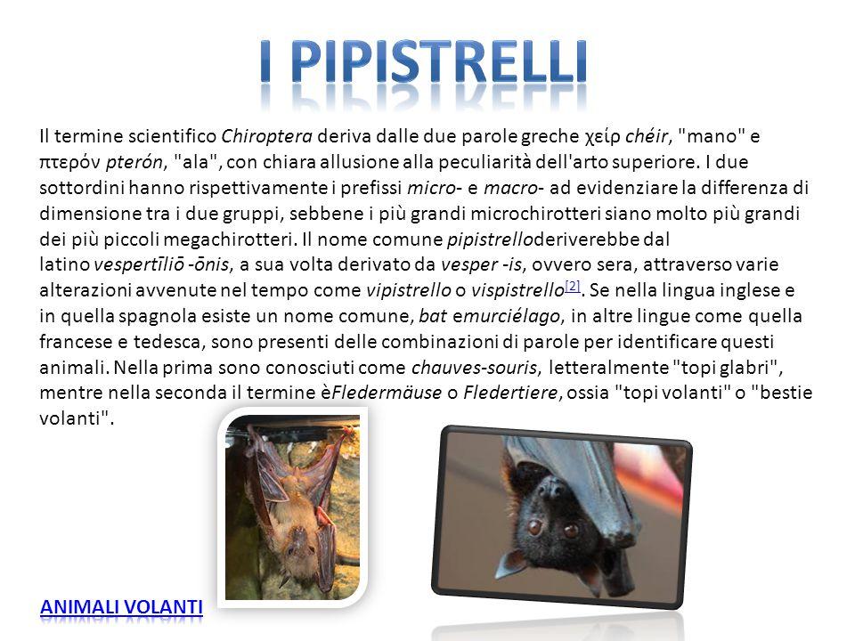 I PIPISTRELLI