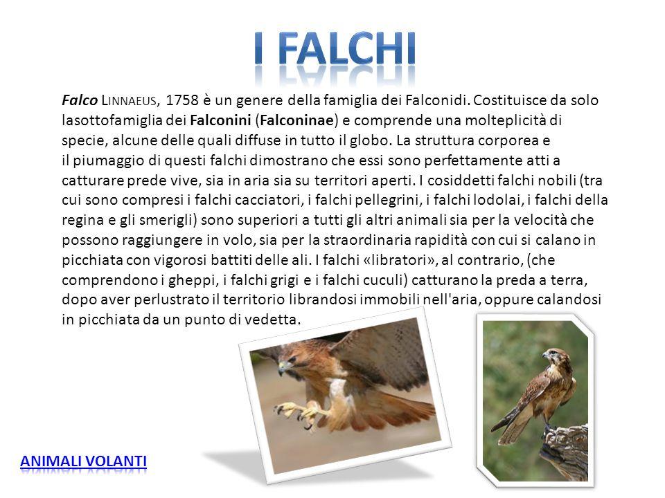 I FALCHI