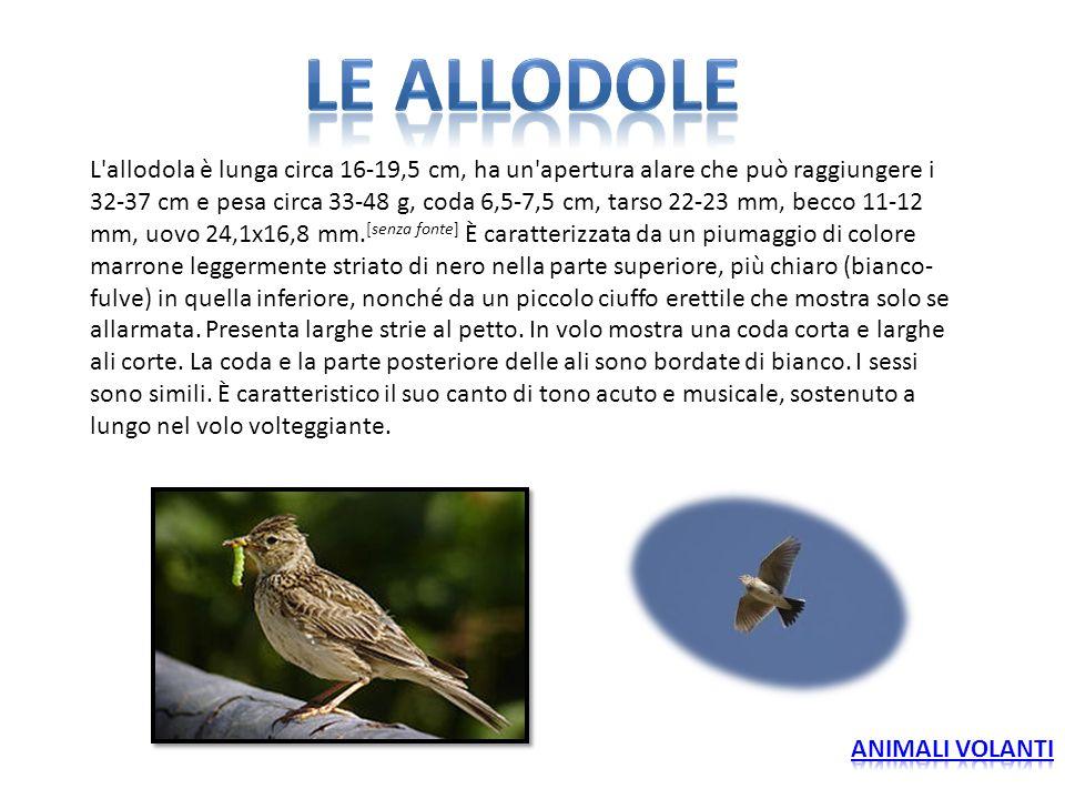 LE ALLODOLE