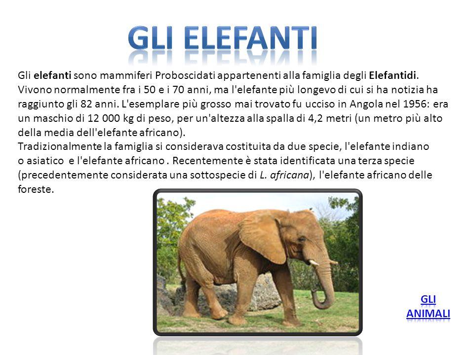 Gli elefanti Gli elefanti sono mammiferi Proboscidati appartenenti alla famiglia degli Elefantidi.