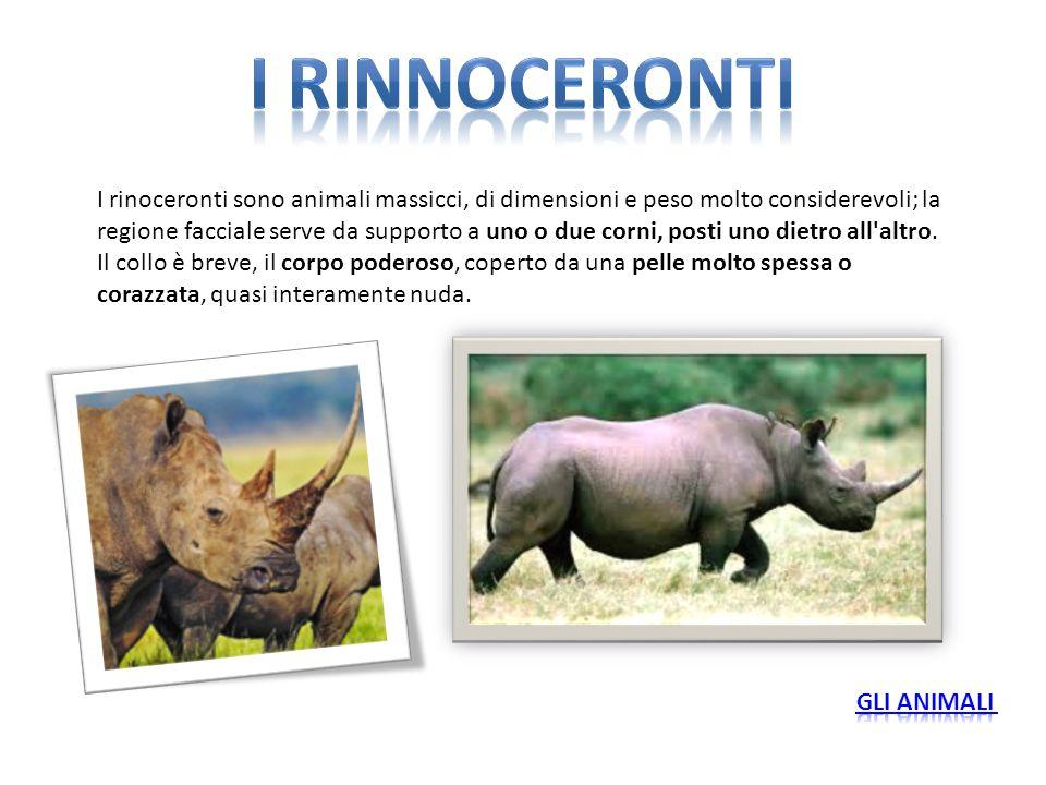 I rinnoceronti