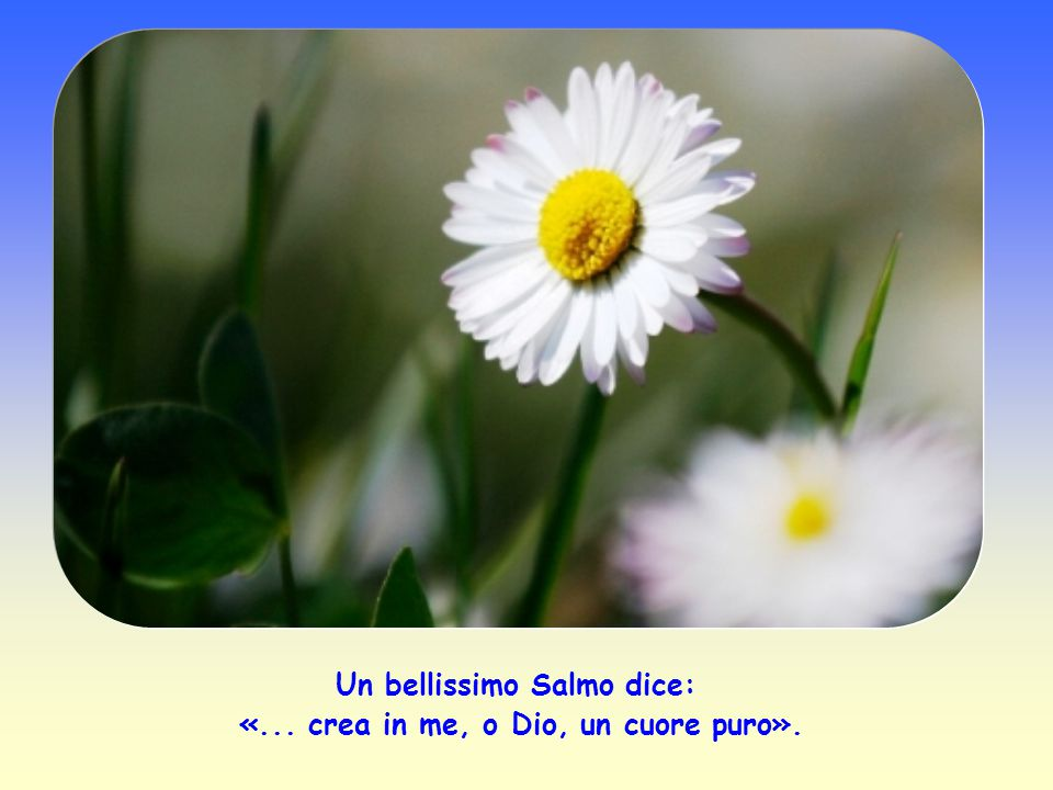 Un bellissimo Salmo dice: «... crea in me, o Dio, un cuore puro».