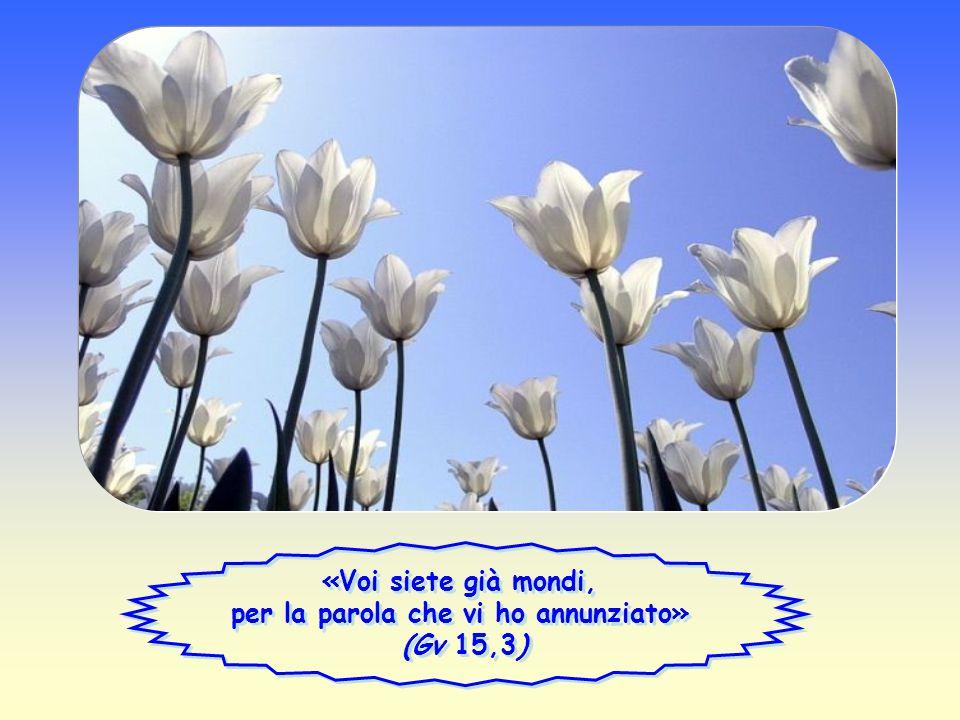 «Voi siete già mondi, per la parola che vi ho annunziato» (Gv 15,3)