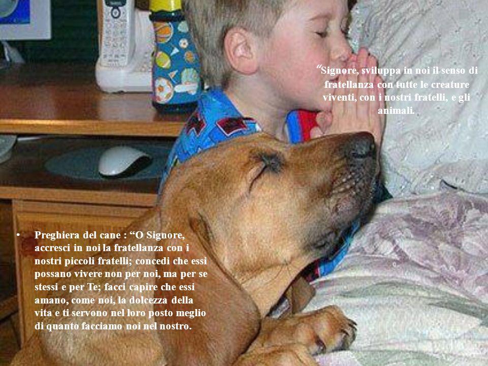 Signore, sviluppa in noi il senso di fratellanza con tutte le creature viventi, con i nostri fratelli, e gli animali.