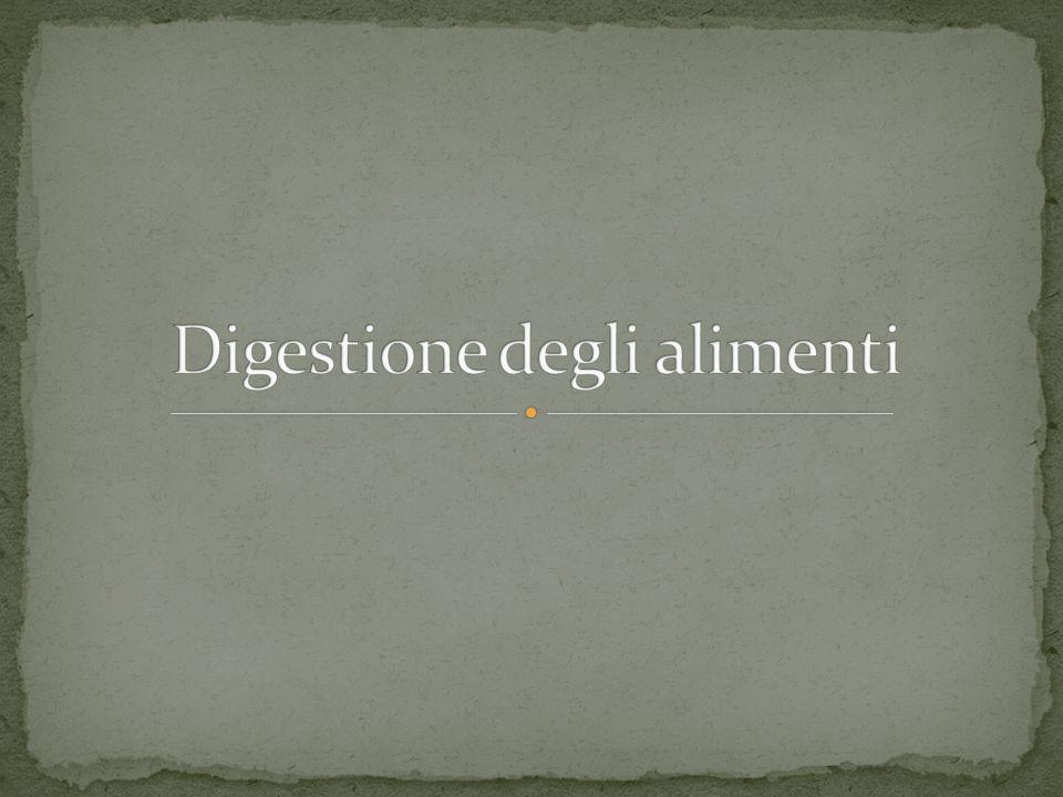Digestione degli alimenti