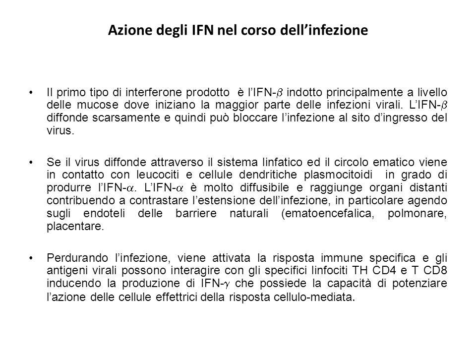 Azione degli IFN nel corso dell'infezione