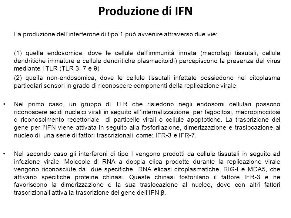 Produzione di IFN La produzione dell'interferone di tipo 1 può avvenire attraverso due vie: