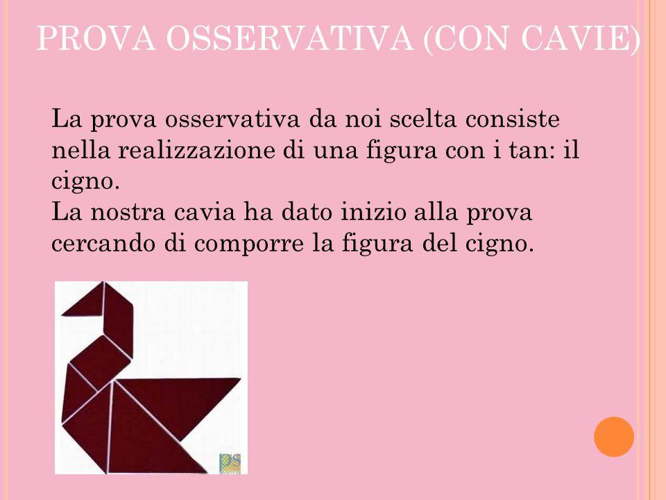 PROVA OSSERVATIVA (CON CAVIE)