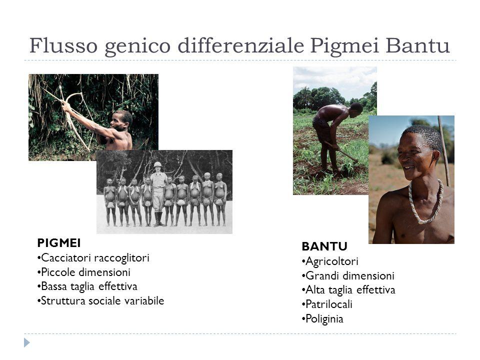 Flusso genico differenziale Pigmei Bantu