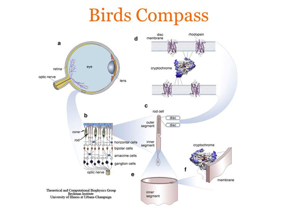 Birds Compass