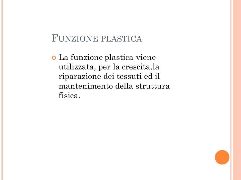 Funzione plastica La funzione plastica viene utilizzata, per la crescita,la riparazione dei tessuti ed il mantenimento della struttura fisica.