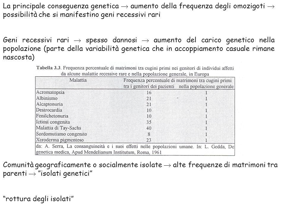 La principale conseguenza genetica  aumento della frequenza degli omozigoti  possibilità che si manifestino geni recessivi rari
