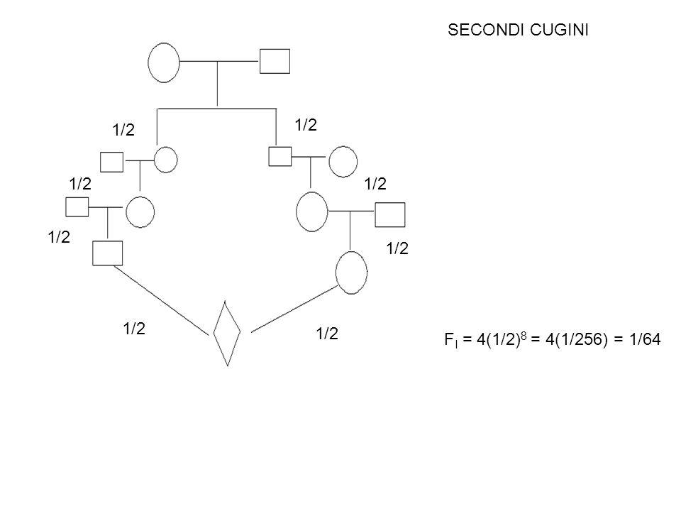 SECONDI CUGINI 1/2 1/2 1/2 1/2 1/2 1/2 1/2 1/2 FI = 4(1/2)8 = 4(1/256) = 1/64
