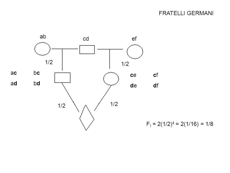 FRATELLI GERMANI ab cd ef 1/2 1/2 ac bc ad bd ce cf de df 1/2 1/2 FI = 2(1/2)4 = 2(1/16) = 1/8