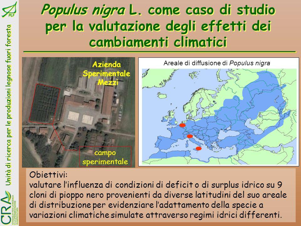 Areale di diffusione di Populus nigra