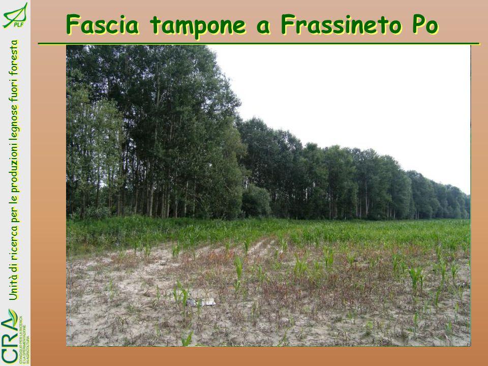 Fascia tampone a Frassineto Po