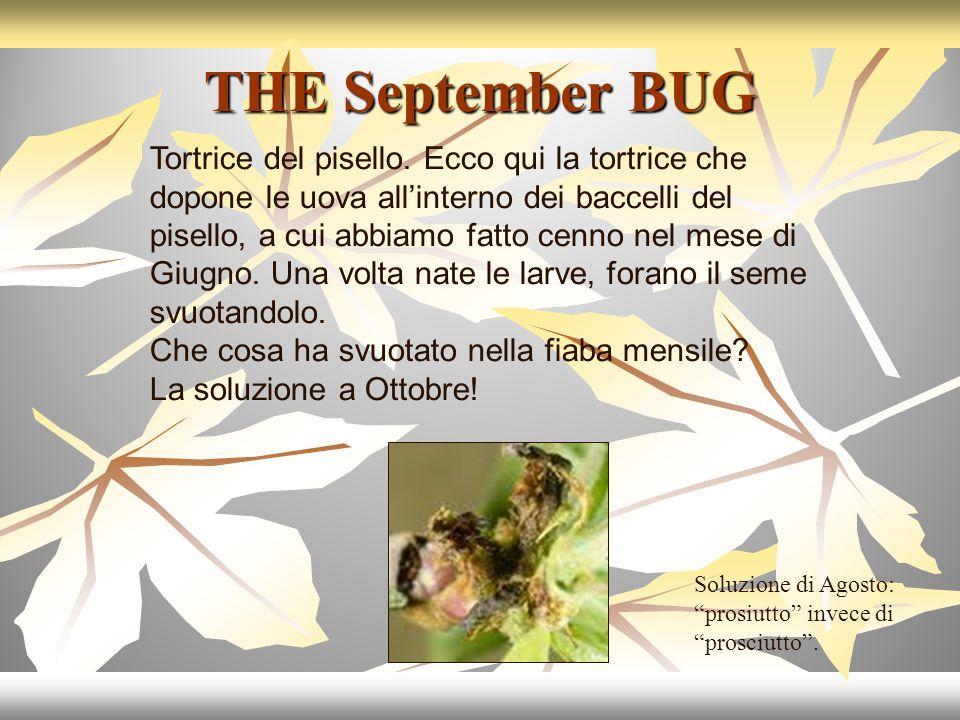THE September BUG