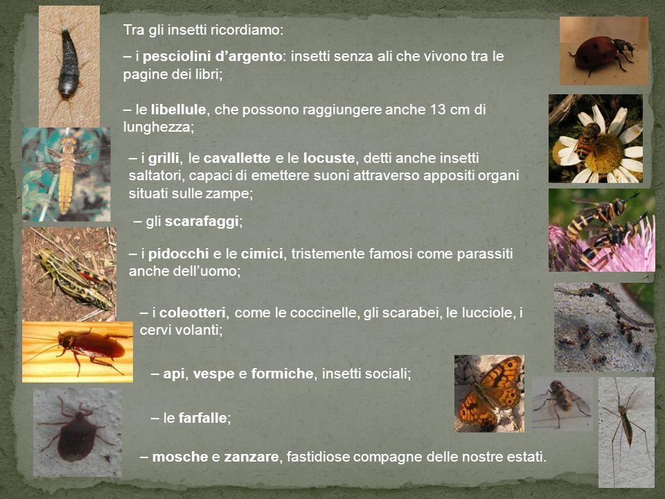 Tra gli insetti ricordiamo:
