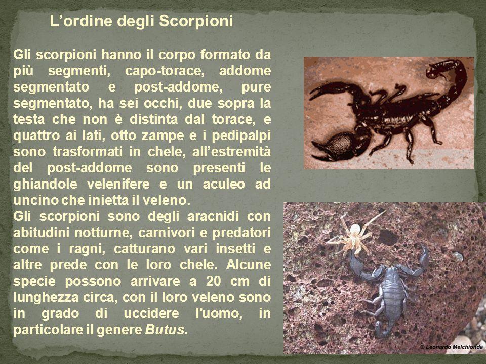 L'ordine degli Scorpioni