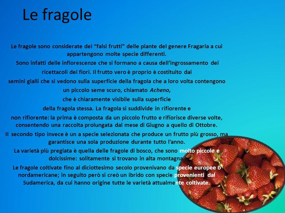 Le fragole Le fragole sono considerate dei falsi frutti delle piante del genere Fragaria a cui appartengono molte specie differenti.