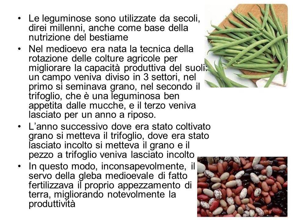 Le leguminose sono utilizzate da secoli, direi millenni, anche come base della nutrizione del bestiame