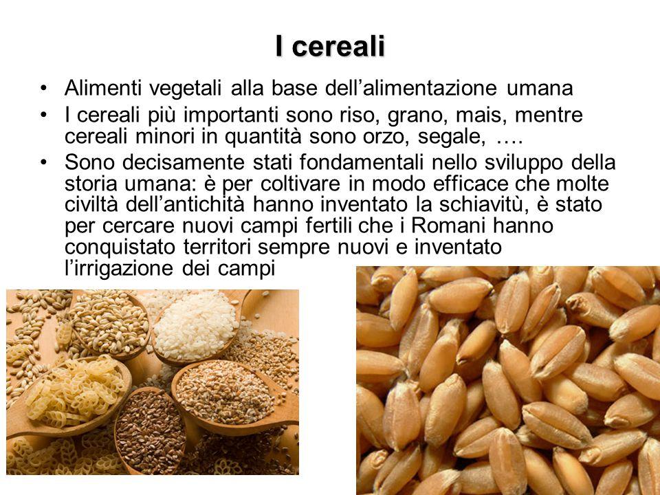 I cereali Alimenti vegetali alla base dell'alimentazione umana
