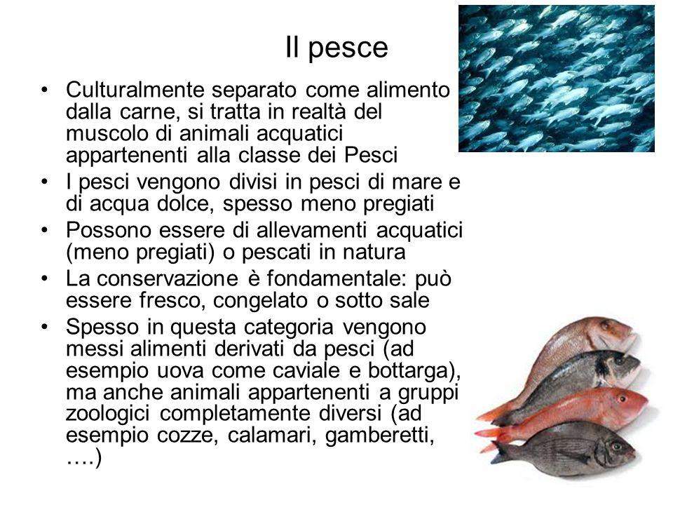 Il pesce Culturalmente separato come alimento dalla carne, si tratta in realtà del muscolo di animali acquatici appartenenti alla classe dei Pesci.