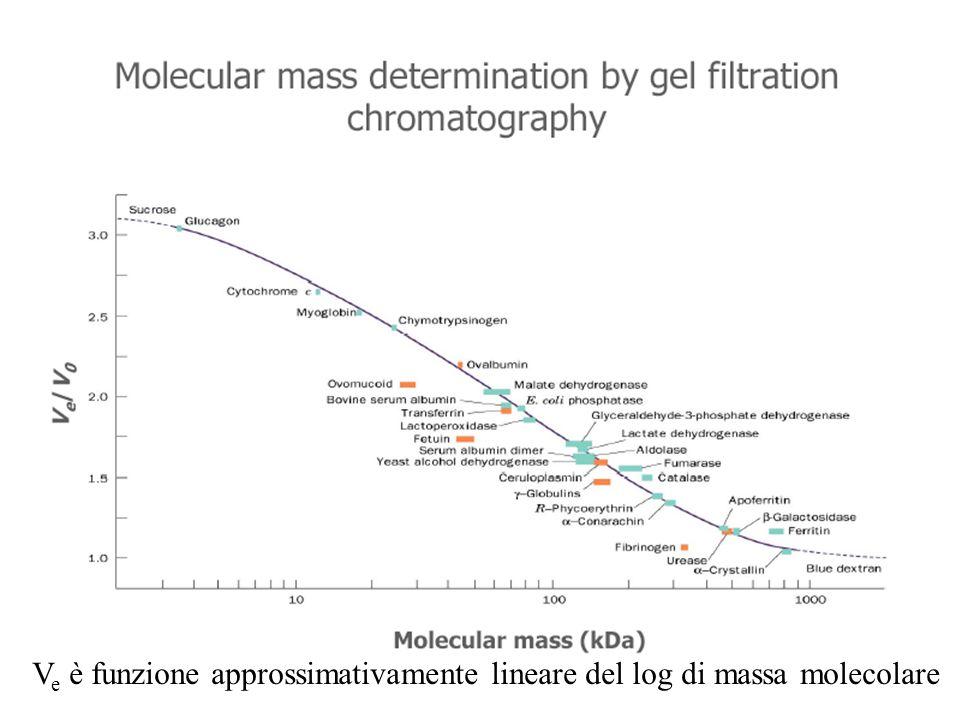 Ve è funzione approssimativamente lineare del log di massa molecolare