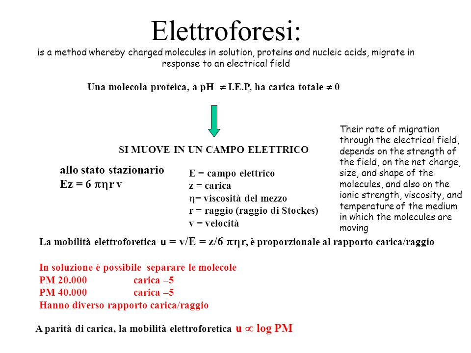 Elettroforesi: is a method whereby charged molecules in solution, proteins and nucleic acids, migrate in response to an electrical field