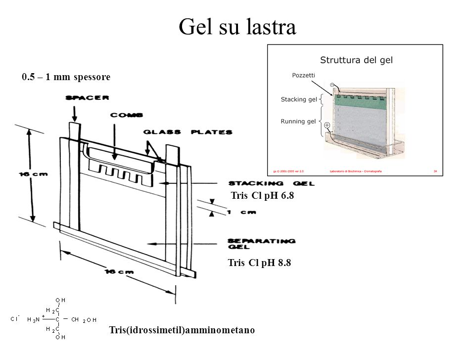 Gel su lastra 0.5 – 1 mm spessore Tris Cl pH 6.8 Tris Cl pH 8.8