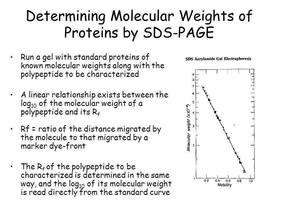 Determining Molecular Weights of Proteins by SDS-PAGE
