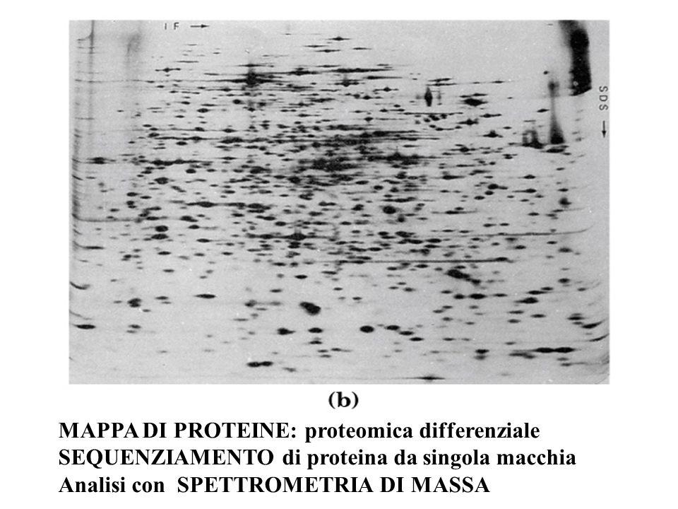 MAPPA DI PROTEINE: proteomica differenziale