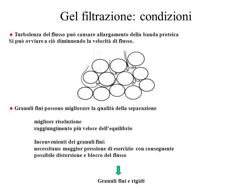 Gel filtrazione: condizioni