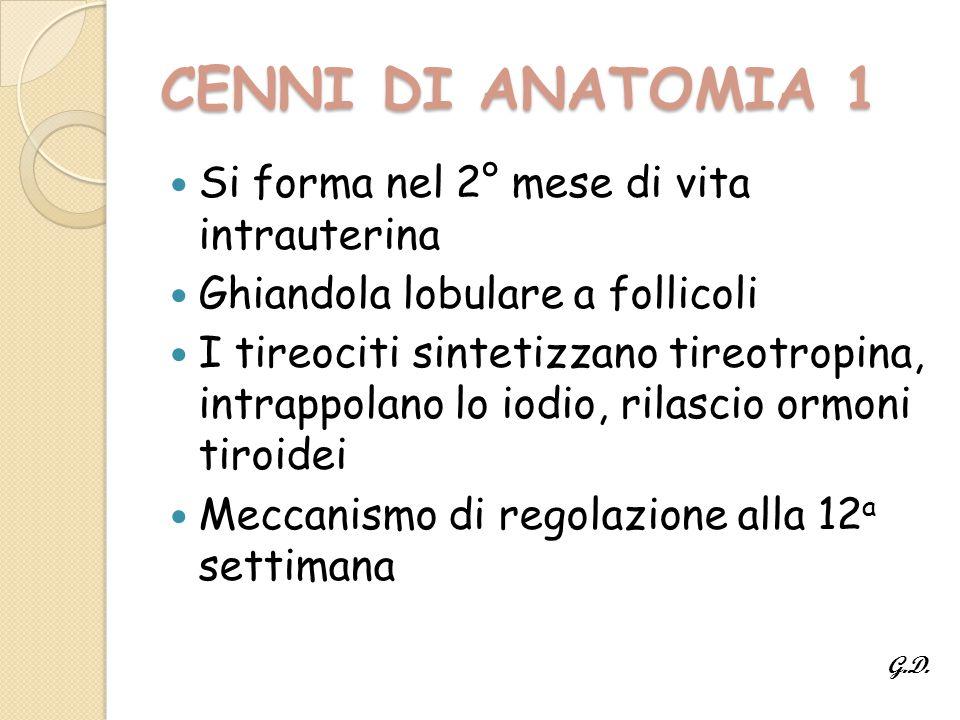 CENNI DI ANATOMIA 1 Si forma nel 2° mese di vita intrauterina
