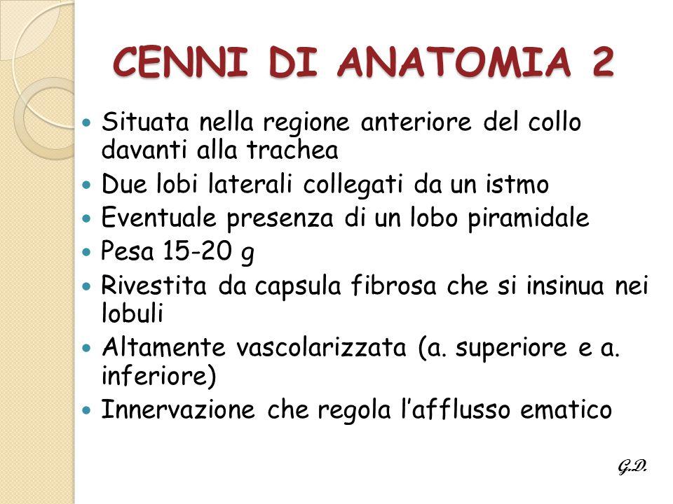 CENNI DI ANATOMIA 2 Situata nella regione anteriore del collo davanti alla trachea. Due lobi laterali collegati da un istmo.