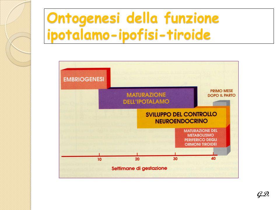 Ontogenesi della funzione ipotalamo-ipofisi-tiroide