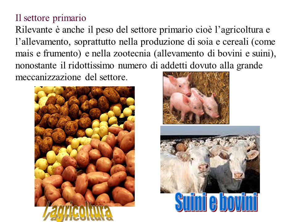 Suini e bovini l agricoltura Il settore primario