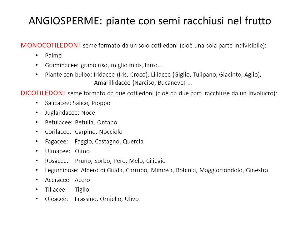 ANGIOSPERME: piante con semi racchiusi nel frutto