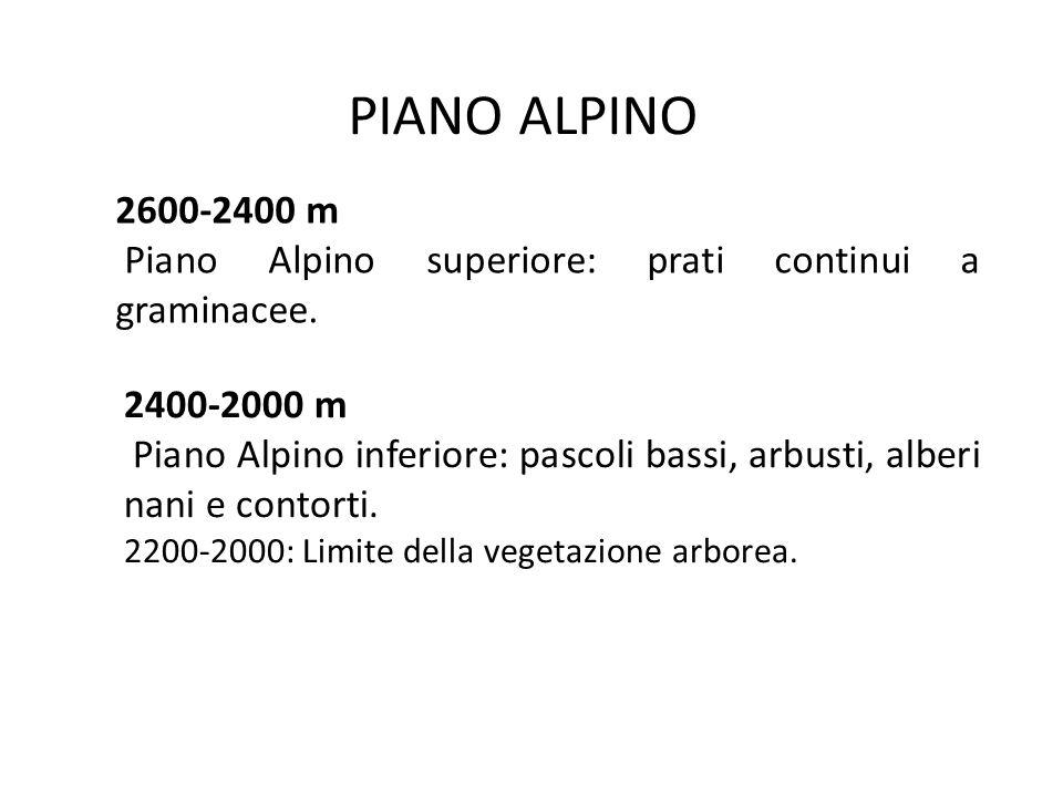 PIANO ALPINO 2600-2400 m. Piano Alpino superiore: prati continui a graminacee. 2400-2000 m.